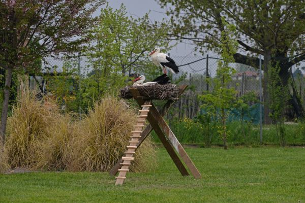 Ground-level nest for injured storks